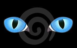 Image Of Cat Eyes Stock Image - Image: 15711131