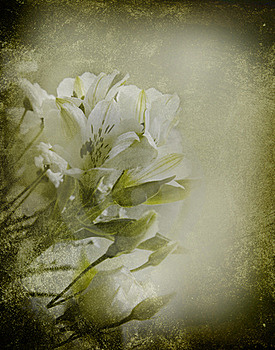 Floral Background Royalty Free Stock Photo - Image: 15712225