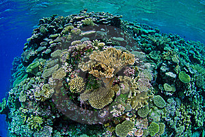 Coral Reef Royalty Free Stock Photography - Image: 15715287