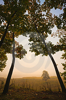 Two Oaks In The Fog Royalty Free Stock Images - Image: 15723319