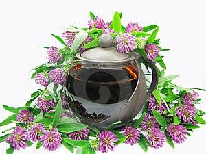 Floral Clover Tea In Teapot Royalty Free Stock Photos - Image: 15725228