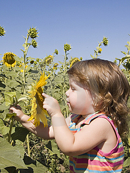 Child And Sunflower Royalty Free Stock Photography - Image: 15730307