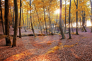 Autumn Scenery. Royalty Free Stock Photo - Image: 15740495