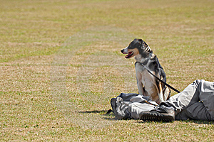 Dog In The Park Stock Images - Image: 15743054