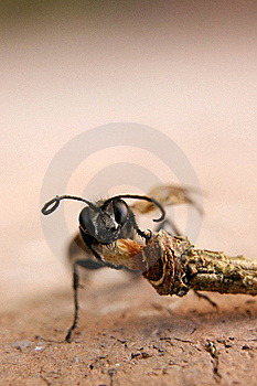 Ant Stock Photography - Image: 15744722