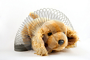 Slinky Puppy Stock Images - Image: 15748044