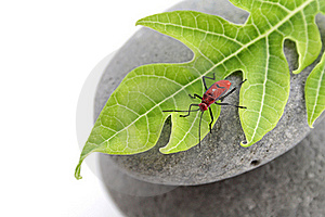 Insect On Leaf Stock Images - Image: 15751044