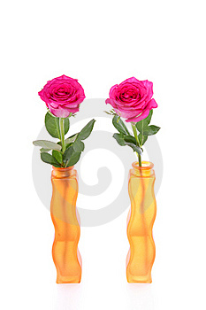 Two Pink Roses Stock Photo - Image: 15756080