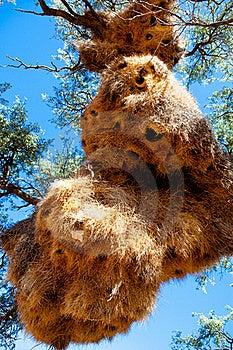 The Sociable Weavers Nest Stock Photography - Image: 15762802