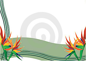 Bird Of Paradise  With Green Background Stock Photography - Image: 15778832