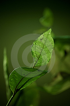 Green Leaf Against Dark Background Stock Image - Image: 15780511