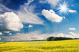 Green Wheat And Beautiful Blue Sky. Royalty Free Stock Images - Image: 15781629