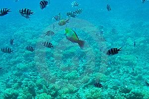 Astonishing Undersea World Of Red Sea. Stock Photos - Image: 15781643