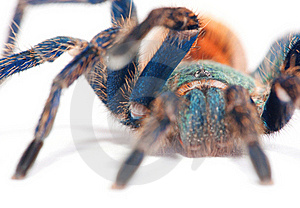 Spider Detail Royalty Free Stock Photos - Image: 15781668
