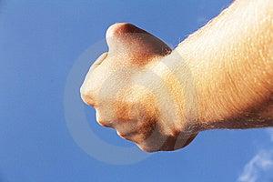 Hand Stock Image - Image: 15789291