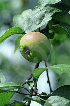 Green Apple Stock Photo - Image: 15792870