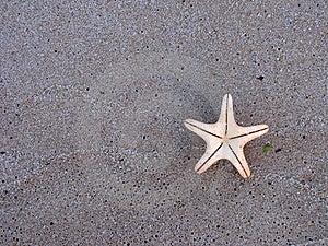 Starfish On Wet Sand Stock Image - Image: 15799391