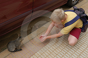 Boy Meets Kitty Stock Images - Image: 1580114