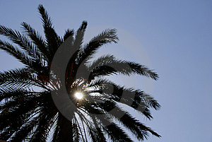 Palm Tree Silhouette Stock Photography - Image: 1582882