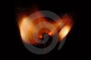 Burn Tulip Stock Images - Image: 1583824