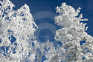 Winter branches with snow  #5 Stock Images