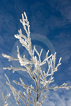 Winter branches with snow against blue sky  with clouds #8 Stock Images