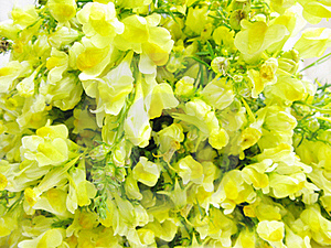 Bouquet Of Field Yellow Flowers Royalty Free Stock Image - Image: 15806346