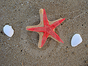 Two Starfish On Sandy Beach Royalty Free Stock Image - Image: 15807056