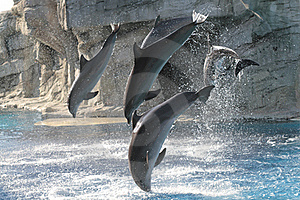 Acrobats Dolphins Stock Image - Image: 15807841