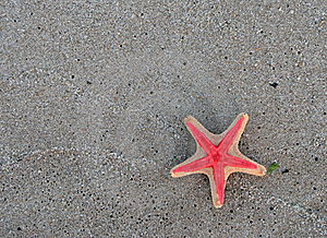 Starfishes Stock Photos - Image: 15808363