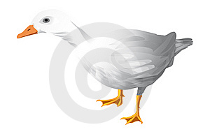 Duck Royalty Free Stock Photo - Image: 15808635