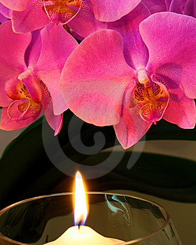 Orchid By Candle Light Royalty Free Stock Photos - Image: 15818018
