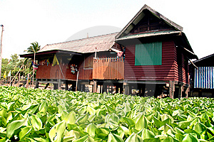 Water Hyacinth And The House Royalty Free Stock Photography - Image: 15820567