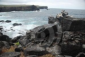 Galapagos Iguanas Over Some Rocks Stock Photos - Image: 15822083