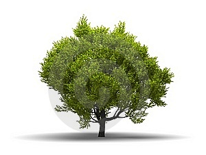 Isolated Green Broadleaf Tree Royalty Free Stock Photo - Image: 15830855