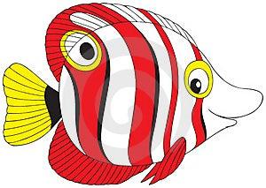Tropical Fish Stock Photos - Image: 15831433