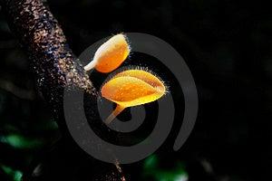 Hairy Mushroom Royalty Free Stock Image - Image: 15837126