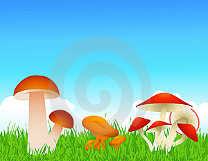 Mushrooms Stock Image - Image: 15844831