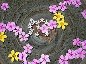Tropical Wishing Well Stock Image - Image: 15847381
