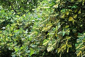 Leaf Royalty Free Stock Photography - Image: 15852017