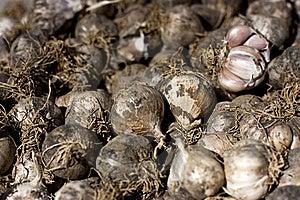 Garlic Stock Photography - Image: 15852312