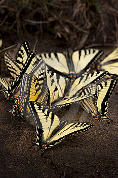Butterflies Stock Photos - Image: 15852583