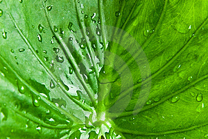 Droplet On Green Leaf Royalty Free Stock Images - Image: 15860289