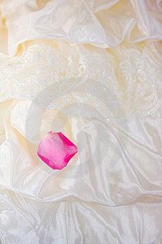 Pink Petal Stock Photography - Image: 15861012