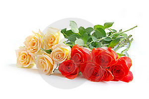 Rose Royalty Free Stock Photo - Image: 15870105