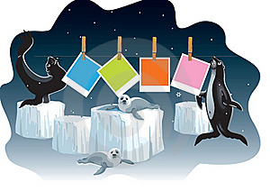 Seals Dry Photo Frames Royalty Free Stock Photography - Image: 15873227
