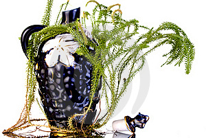 Decanter With Lycopodium Stock Photos - Image: 15877603