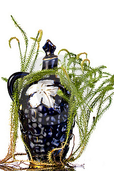 Old Decanter With Lycopodium Stock Images - Image: 15877604
