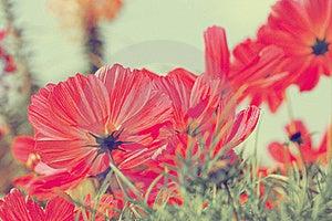 Flowers Royalty Free Stock Photo - Image: 15884705