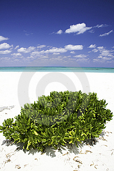 Solitude In Greens And Blues Royalty Free Stock Image - Image: 15888536